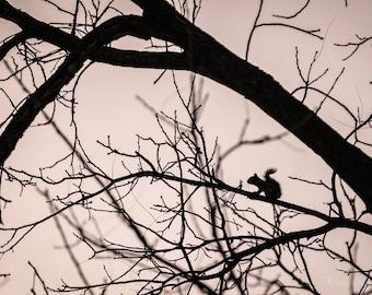 Wildlife Photography, Squirrel Photography, Animal Photography, Tree Lovers, Black Walnut Tree, Wildlife Photo Print