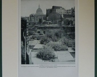 1950s Vintage St Paul's Cathedral Print World War Two London bombsite with St Paul's in the background, Available Framed, Wasteland Picture