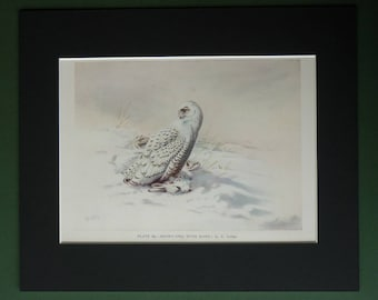 1930s Antique Mounted Ornithology Print of a Snowy Owl Bird of Prey by Natural History Artist George Edward Lodge
