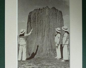 1950s Vintage Print Of A Giant Termite Nest - White Ant Print - Vintage Insect Decor - Available Framed - Vintage Art - Vintage Sailor Suit