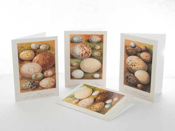 "Set of 8 Vintage Bird Eggs  5""x7"" Blank Note Cards with Envelopes"
