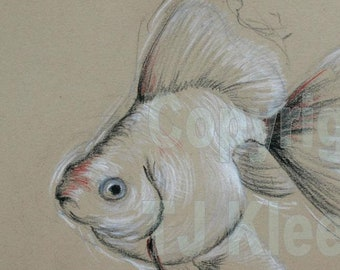 Goldfish Art Drawing Colored Pencil Wall Art Home Decor Original Unique Gift Ryukin Fancy Zen Art by TJ Kleens