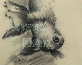 Veiltail Goldfish Art Drawing Charcoal Black and White Wall Art Home Decor Original Unique Gift Free Shipping Fancy Zen by TJ Kleens