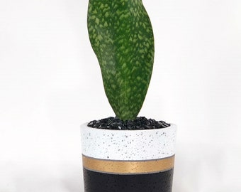 """Large Concrete Cylinder """"JT"""" Black, White and Gold Stripped"""