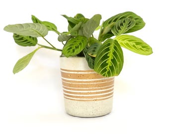 Small Concrete Cylinder Pot Gold Striped