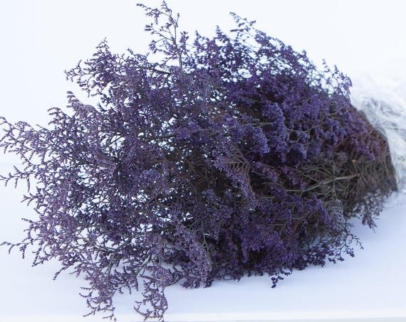 Preserved Dried Caspia Dyed Purple -  Preserved Misty - Preserved Caspia - Purple Flowers - FIller Flower - DIY Fowers - Purple Caspia