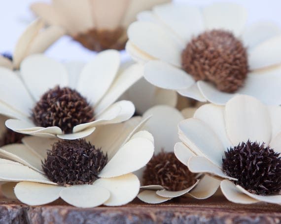 Palm Belly Flowers - SET OF 10 - Thistle Daisies - Thistle Flowers - Natural Palm Flowers - Craft Flowers - Palm Flowers
