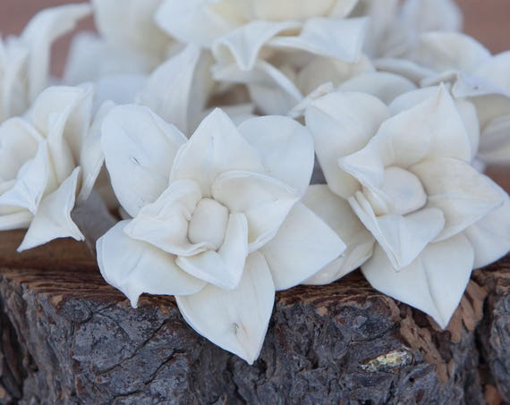 Star Magnolia Sola Flowers - Sold in Sets of 10, 50 & 100