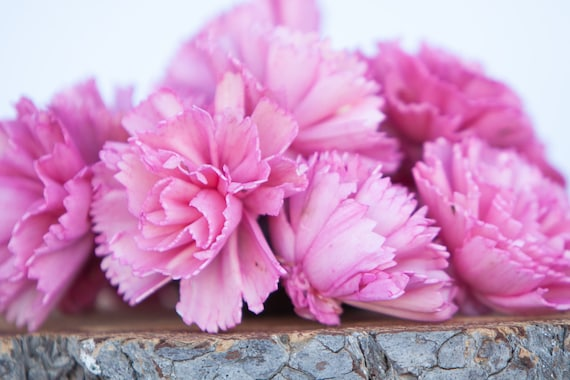 Hot Pink Carnation Sola Flowers - SET OF 10