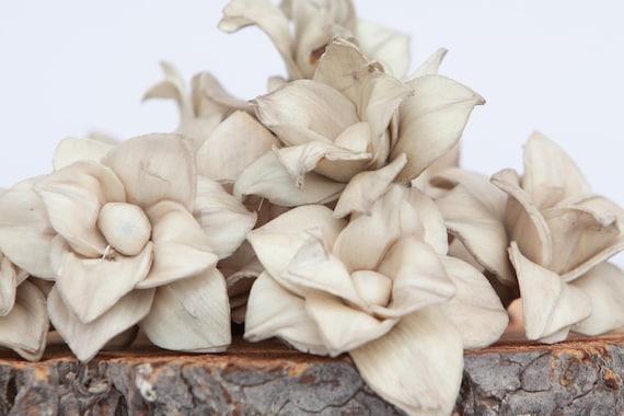 Tan Star Magnolia Sola Flowers