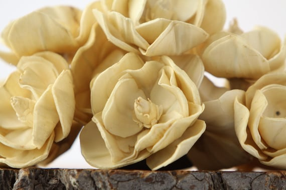 Champagne Sola Magnolia Flowers- SET OF 10