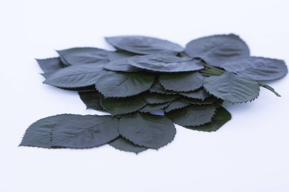 Preserved Rose Leaves - Preserved Greenery