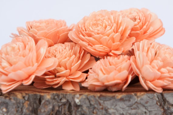 Peach Belly Sola Flowers - SET OF 10