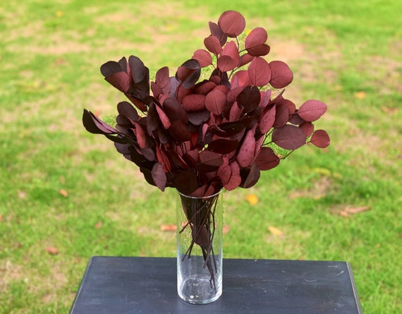 Red Preserved & Dyed Populus Eucalyptus Foliage - red silver Dollar Eucalyptus Preserved