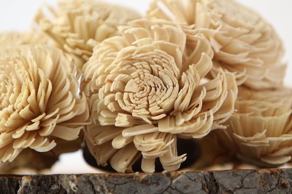 Champaign Large Chorki Sola Flowers - Set of 10 ,  Champaign Sola Flowers, Wood Sola Flowers, Chorki Sola, Keepsake Flowers, Balsa Wood