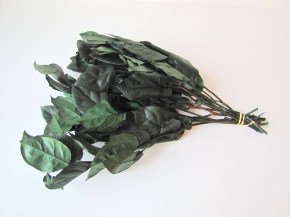 Salal  - Dried and Preserved Salal - Dried Salal Leaves - Salal Leaves Green Color - Dried Foliage - DIY Fowers - Dried Greenery
