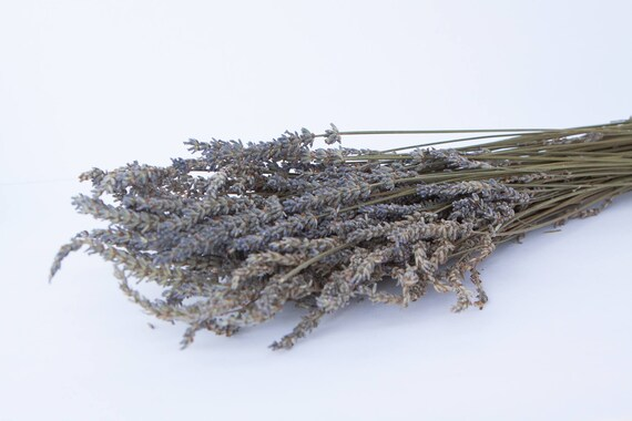 Dried Lavender - Dried Lavander - French Lavander