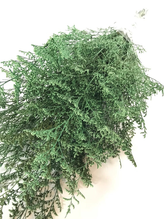 Preserved Dried Caspia Dyed Green -  Preserved Misty - Preserved Caspia - Green Flowers - FIller Flower - DIY Fowers - Green Caspia