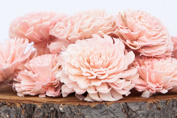Blush Pink Large Chorki Sola Flowers - Set of 10
