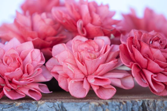 Watermelon Dahlia Sola Flowers - Set of 10, Folded Sola FLowers, Sola Flowers, Sola Flower, Wood Sola Flowers, Balsa Flowers, Craft Flowers