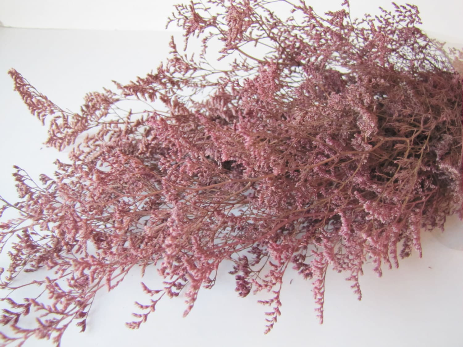 Preserved dried caspia dyed pink preserved misty preserved caspia preserved dried caspia dyed pink preserved misty preserved caspia pink flowers filler flowers diy fowers mightylinksfo