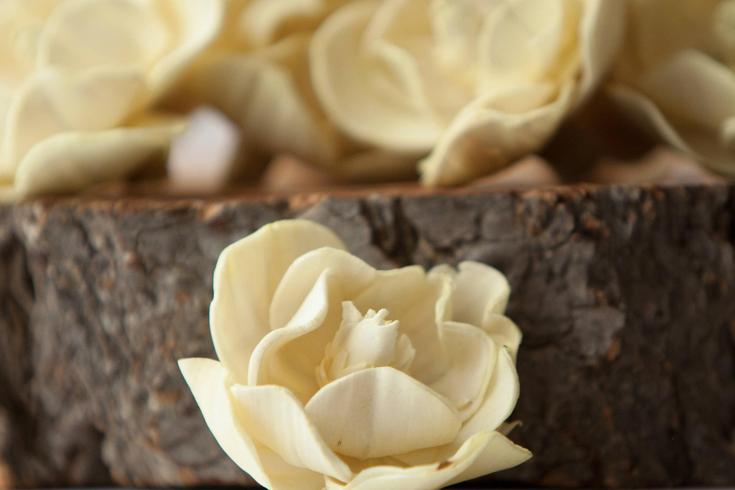 Pale Yellow Sola Magnolia Flowers Set Of 10 Light Yellow Sola