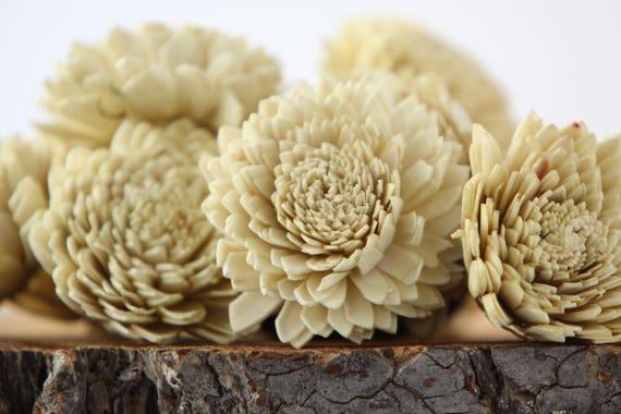 Tan Zinnia Sola Flowers - SET OF 10