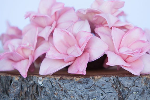 Baby Pink Star Magnolia Sola Flowers - SET OF 10