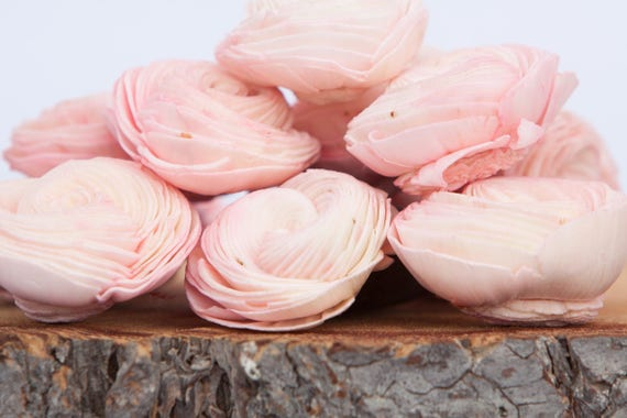 Blush Pink Sola Shell Flowers - SET OF 10