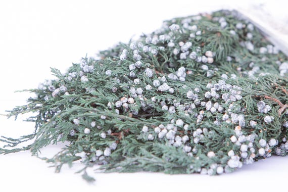 Preserved & Dyed Blueberry Juniper Foliage - Blueberry Juniper Greenery - Winter Greenery - Evergreen Foliage