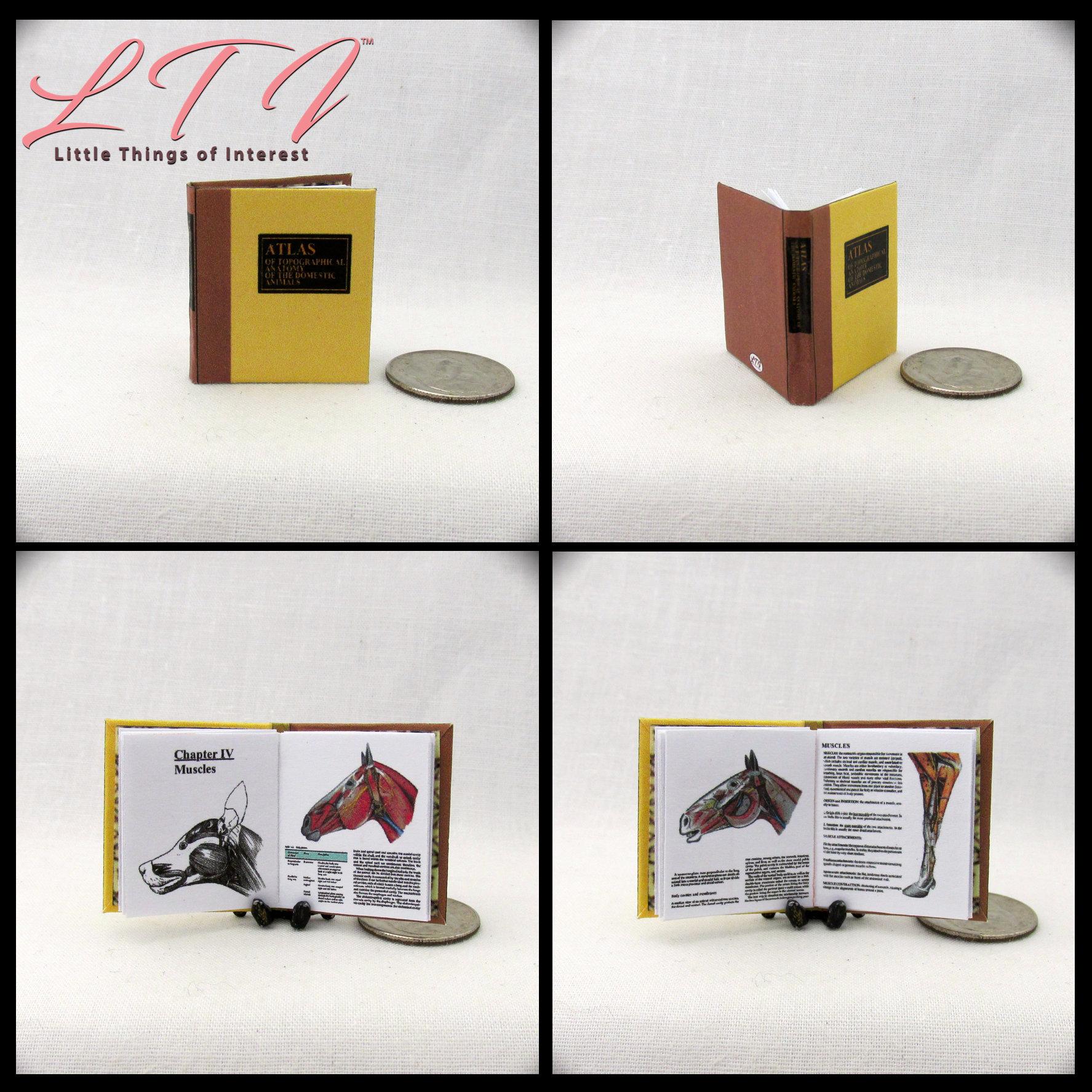 ANATOMY Of DOMESTIC ANIMALS Miniature Dollhouse 1:12 Illustrated ...