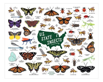 """U.S. State Insects 16x20"""" Poster"""