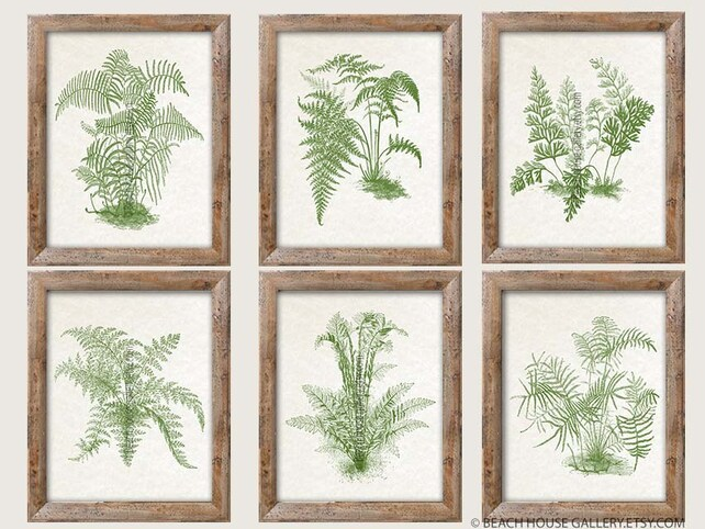 Ferns Wall Art Botanical Art Antique Fern Prints Set of 6 | Etsy