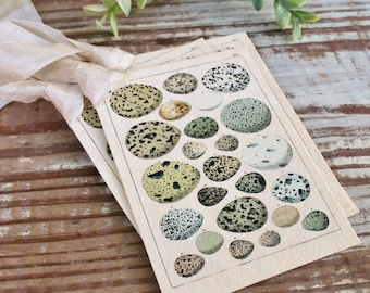 Botanical EGGS Vintage Easter Gift Tags Natural History Book Page French Farmhouse Decor Card Shabby Speckled Eggs Chart
