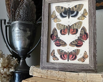 Vintage Botanical Print Moth Butterfly Wall Art Sign Wood Frame Sign Farmhouse Decor Natural History Book Page BLACK GOLD BROWN