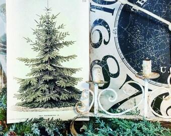 Vintage Christmas Pine Tree Wood Sign LARGE Poster Farmhouse Christmas Decor Botanical Natural History Book Page Wall Art Print