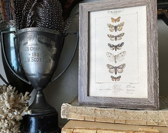 Vintage Botanical Print Moth Butterfly Wall Art Sign Wood Frame Sign Farmhouse Decor Natural History Book Page BROWN