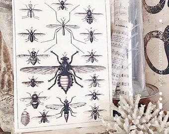 Vintage INSECT CHART Wood Sign Botanical Print Farmhouse Decor Page Wall Art Print  Fixer Upper Primitive Diagram Natural History Halloween
