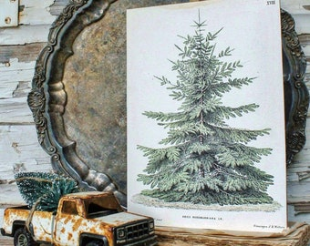 Pine Tree Wood Sign Vintage Christmas Farmhouse Christmas Decor Botanical Natural History Book Page Wall Art Print