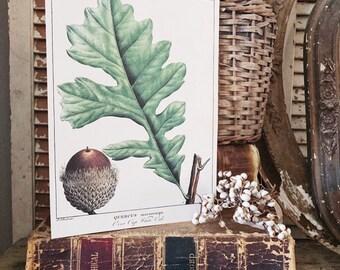 Vintage ACORN LEAF Print Sign Wood Wall Art Sign Farmhouse Decor Page Print Natural Book History Fall Decor