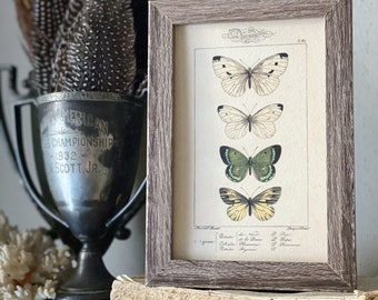 Vintage Botanical Print Moth Butterfly Wall Art Sign Wood Frame Sign Farmhouse Decor Natural History Book Page GREEN WHITE