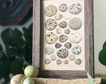 Botanical EGGS Vintage Easter Framed Barn Wood Sign Natural History Book Page French Farmhouse Speckled Eggs Chart