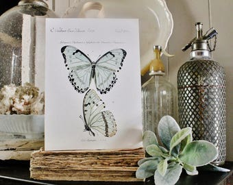Vintage BUTTERFLY BOTANICAL Sign Print Farmhouse Decor Page Print  Fixer Upper Decor Natural History SPRING Wood Wall Art