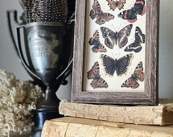 Vintage Botanical Print Moth Butterfly Wall Art Sign Wood Frame Sign Farmhouse Decor Natural History Book Page BLACK ORANGE BROWN