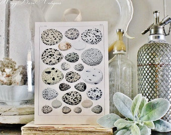 Vintage EGG CHART BOTANICAL Wall Art  Sign Farmhouse Decor Page Wall Art Print Fixer Upper Decor Natural History Speckled Eggs Spring Decor