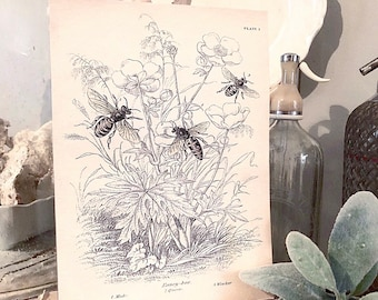 Vintage HONEY BEE BOTANICAL Wall Art Sign Print Farmhouse Decor Page  Print Fixer Upper Decor Natural History Spring Summer Decor