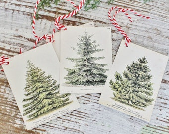 Christmas Pine Tree GIFT TAGS  Vintage Book Of Natural History Farmhouse Decor Gift Wrap Fixer Upper Botanical Tree Primitive Christmas