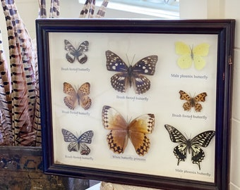 Vintage Butterfly Specimen Natural Taxidermy Preserved Collection Framed Wall Art REAL Dried Insect Farmhouse Decor Industrial Mid Century