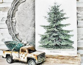 Christmas Pine Tree Wood Sign Vintage Christmas Farmhouse Decor Botanical Natural History Book Page Wall Art Print Primitive