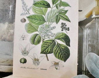 Vintage POISON IVY BOTANICAL Wall Art Sign Print Farmhouse Decor Page Print Wood Sign Natural History Garden Decor